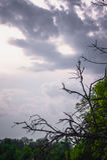 Grön trädöverkantlinje över himmel royaltyfri fotografi