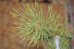 Grön trädfilial i exponeringsglaset framme av ferien för nytt år Arkivfoto