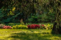 Grön trädgård Royaltyfri Foto