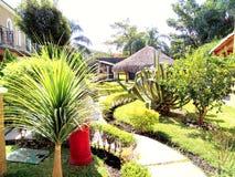 Grön trädgård i Cuernavaca Mexico Arkivbild