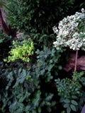 Grön trädgård när som helst av året royaltyfri bild