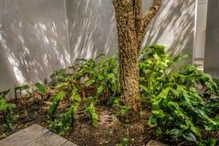 Grön trädgård- och cementvägg arkivbild