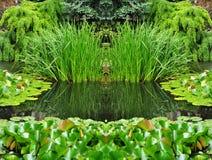 Grön trädgårds- natur Arkivfoto