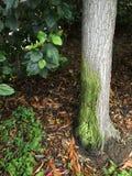 Grön trädmossa Arkivbild