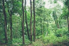 Grön trädskog Arkivfoto