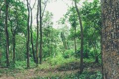 Grön trädskog Royaltyfri Fotografi