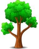 grön trädtecknad film Arkivbild
