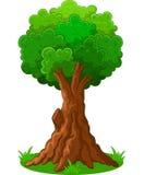 grön trädtecknad film Arkivfoton
