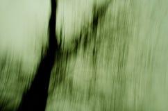 Grön trädtextur Royaltyfri Foto