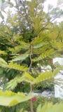 Grön trädväxtstam Royaltyfri Foto