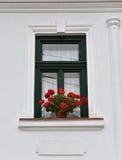 Grön träfönsterram för klassiker och röda blommor på en lantlig hou Royaltyfri Bild