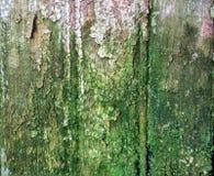 Grön träväggtextur Arkivbild