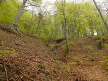 grön trail Royaltyfri Foto