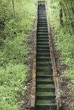 Grön trappa Royaltyfria Bilder