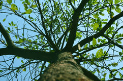 grön tree Arkivfoto