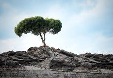 grön tree Royaltyfri Fotografi