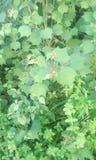grön tree Arkivbild