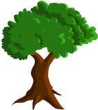 grön tree Royaltyfria Bilder
