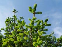 grön tree för detalj arkivbild