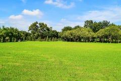 grön tree för gräs Royaltyfri Foto