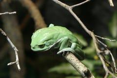 grön tree för groda royaltyfri fotografi