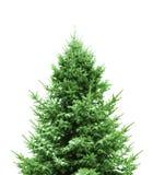 grön tree för jul Arkivbild