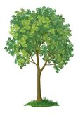 Kastanjebrun tree. Vektor Royaltyfria Bilder