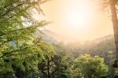 grön tree för skog royaltyfri foto