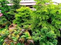 Grön trevlig stadsnatur för träd Fotografering för Bildbyråer