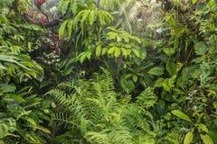 Grön tropisk bakgrundsrainforest Arkivbilder
