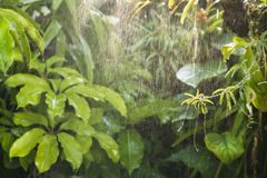 Grön tropisk bakgrundsrainforest Royaltyfri Fotografi