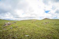 Grön tundra med negativt utrymme längs den Beartooth huvudvägen royaltyfria foton