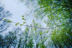 Grön tunn filial Arkivbilder