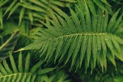 Grön tunn palmbladväxt som växer i de lösa tropiska skogväxterna, abstrakt färg för vintergröna vinrankor arkivbild