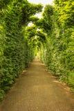 Grön tunnel Arkivfoton