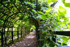grön tunnel Arkivfoto