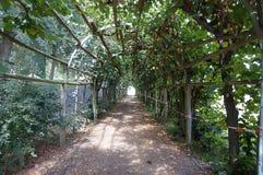 grön tunnel royaltyfria bilder