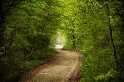 grön tunnel Royaltyfri Fotografi