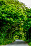 Grön tunnel, Irland Royaltyfria Foton