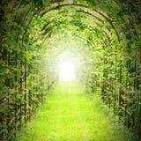 Grön tunnel med solstrålar arkivfoton