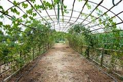 Grön tunnelträdgård Fotografering för Bildbyråer