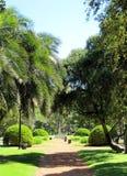 Grön tyst park för stad Arkivbilder