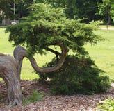 Grön u-formig trädlem Royaltyfri Fotografi
