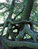 Grön uppehälle som omfamnar träd Royaltyfri Fotografi