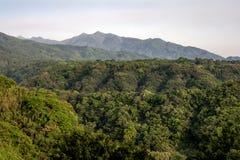 Grön urtids- skog Royaltyfri Fotografi