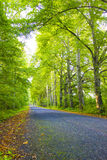 Grön väg Royaltyfria Bilder
