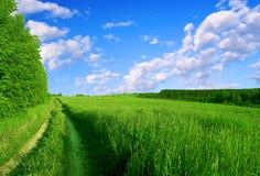 grön väg Royaltyfria Foton