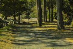 grön väg Royaltyfri Fotografi