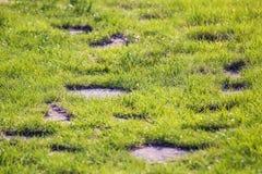 grön väg arkivfoton