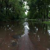 Grön väg efter regn Arkivbilder
